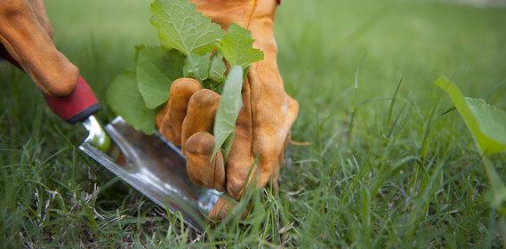 Arracher-les-mauvaises-herbes