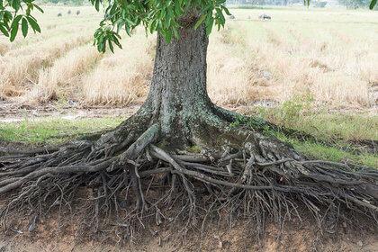 L-arbre-et-ses-racines