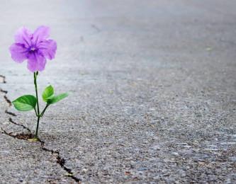 La résilience : Comment surmonter les difficultés ?